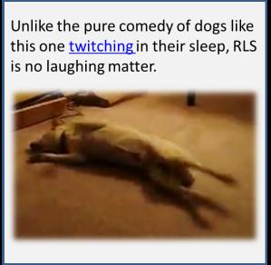 dog twitching