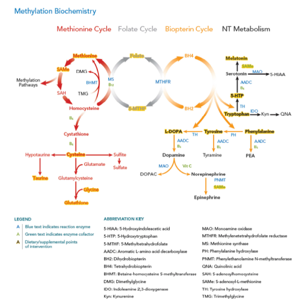 Methylation Map