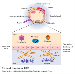 Figure 1. The blood-brain barrier acts as a wall to protect the brain and keep harmful substances out.