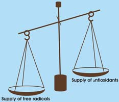 Figure 1. Oxidative stress is an imbalance between the amount of free radicals and antioxidants in the body.