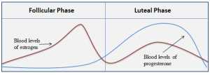 Figure 1. During the follicular phase, estradiol peaks around day 12, this estradiol peak and subsequent dropoff signal LH secretion. This sequence of events allows ovulation to occur around day 14. After day 14, during the luteal phase, the corpus luteum secretes progesterone.